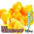 みかん 熊本産 不知火オレンジ(10kg)大特価 ご家庭用 数量限定 しらぬい デコ 蜜柑 柑橘 フルーツ 果物 食品 国華園