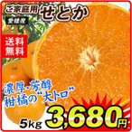 みかん 愛媛産 ご家庭用 せとか 5kg 柑橘 食品
