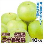梨 二十世紀梨(10kg)1箱 限定特価 鳥取県産 なし 数量限定 フルーツ くだもの 果物 食品