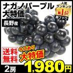 ぶどう ナガノパープル(約350g×2パック)傷あり長野県産 ご家庭用 葡萄 ブドウ 数量限定