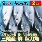 三陸産 鮮 秋刀魚 1尾120g前後 総重量2kg(17尾前後入が目安となります) 生さんま サンマ