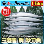 三陸産 鮮 秋刀魚 1尾130g以上保証 総重1.5kg(10〜12尾入が目安となります) 生さんま サンマ