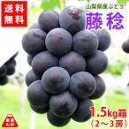 送料無料 山梨県産ぶどう 藤稔(ふじみのり)1.5kg 超大粒種なし葡萄で見応え食べ応えあり 産地直送