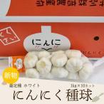 にんにく 1kg×10ネット 中国産 特栽 上海嘉定種(ホワイト)