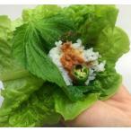 送料無料 サンチュ 200枚(1ケース)(業務用 予約後収穫品 野菜)