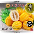 【韓国果物|冷蔵】韓国 マクワウリ ( チャーメ  ・メロン ) 1BOX(5kg 平均数量≒15個)