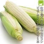白いとうもろこし 訳あり 北海道 富良野産 ピュアホワイト 5本 送料無料