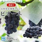 【予約商品】 ぶどう 訳あり 種なし ピオーネ  約2kg 山形県産 ご自宅用 葡萄 gr05