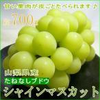 シャインマスカットぶどう たねなし 送料無料  約700g 350g×2パック 糖度約20度  山梨産 葡萄 ブドウ グレープ 敬老の日ギフト プレゼント