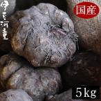 国産 こんにゃく芋 新物 令和元年度秋産  5キロ 仕入商品