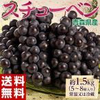 葡萄 ぶどう 送料無料 青森県産 スチューベン 5〜9房 約1.5kg