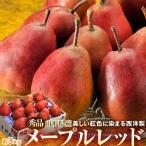 送料無料 紅色に染まる西洋梨「メープルレッド」 山形県産 7〜13玉 約3kg 豊洲市場