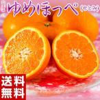 柑橘 みかん 山口県産 ゆめほっぺ M〜3L 約2.5kg 送料無料