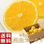 柑橘 神奈川・小田原産『湘南ゴールド』 約1kg 無選別 ※常温・送料無料 frt ☆