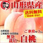 桃 白桃 3kg ご家庭用 無袋栽培 約8玉〜15玉入り 訳あり わけあり 山形県産 お取り寄せ