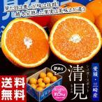 柑橘 みかん 愛媛県三崎産 訳あり シュガースポット 清見 M〜4L 約5kg 送料無料