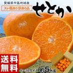 柑橘 フルーツ 愛媛県 中島地域産 訳あり せとか 約5kg S〜3Lサイズ 常温 送料無料