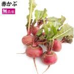 赤かぶ(1〜2個)  5袋 栃木県産無農薬栽培。 送料無料