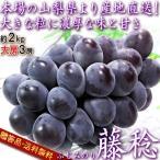 産地直送 藤稔 ふじみのり 種無しぶどう 約2kg 3房入り 山梨県産 贈答規格 特大の粒に濃厚な甘さ!鮮度抜群のギフト葡萄