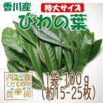 【送料無料】香川産 びわの葉《特選特大》100g(1袋 生葉 約10枚)♪[国産 無農薬](枇杷の葉・ビワの葉)