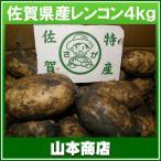 【送料無料】佐賀レンコン4kg