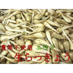 農薬不使用 生らっきょう 1kg 【6月末〜7月中旬ころお届け】